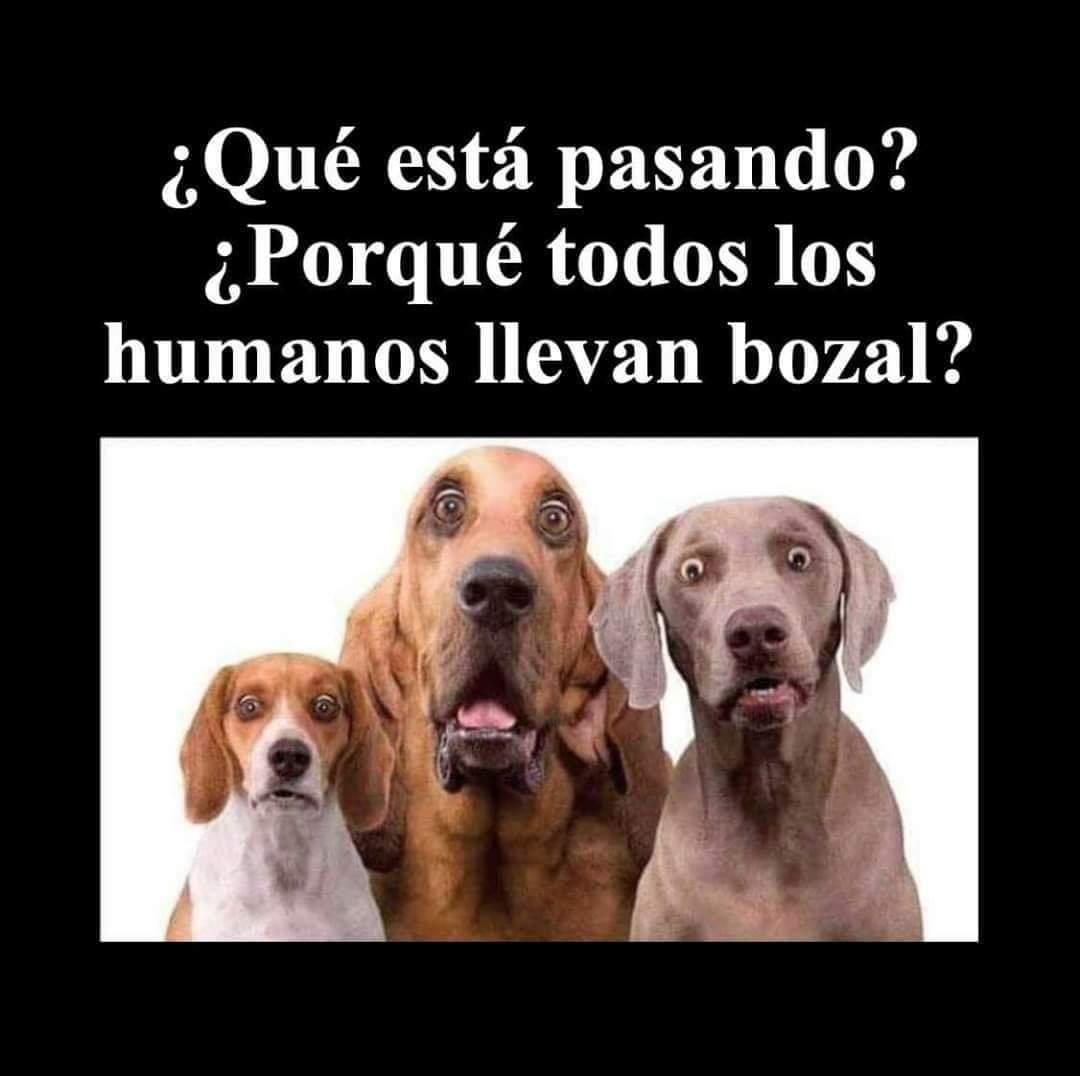 Humor literal Chiste_coronavirus_perros